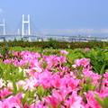 Photos: 花咲くヨコハマ
