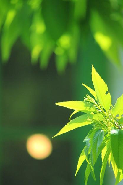Shiny Green