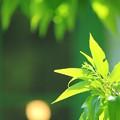Photos: Shiny Green