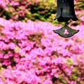 ピンクのお寺