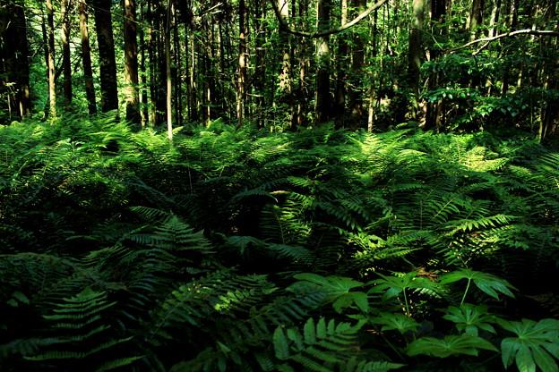 ヨコハマ・ジャングル