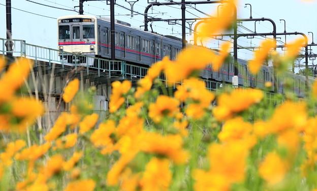 お花見電車~京王バージョン~