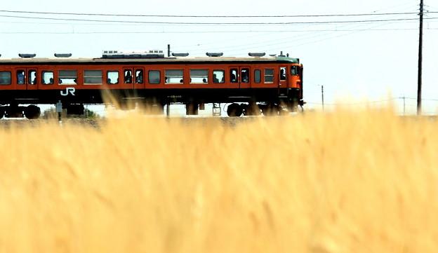 Photos: 麦畑電車
