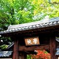 Photos: 新緑の校門