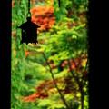 写真: 新緑の喜多院