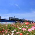 写真: 花のときわ路