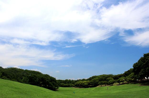 写真: 緑の馬場