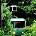Photos: ひょっこり江ノ電