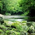 Photos: 緑の渓谷