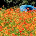 写真: 初秋の花畑