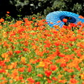 初秋の花畑