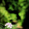 Photos: 古道に咲く花