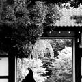 Photos: 夕刻の寺