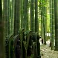 Photos: 竹林に…