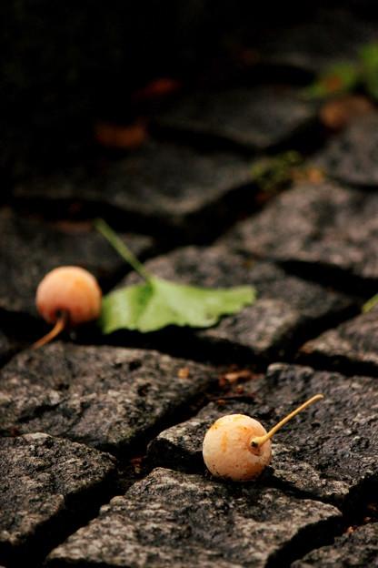 ♪小さい秋み~つけたぁ~♪