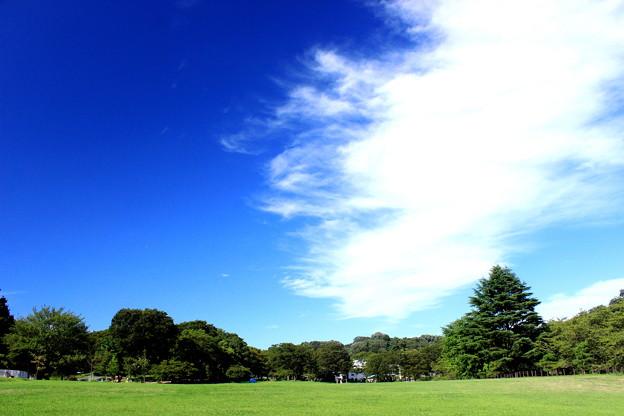 Photos: 晩夏の公園