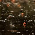 Photos: しとしとぴっちゃん~銀杏 In The Rain~