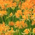 写真: Yellow Rush