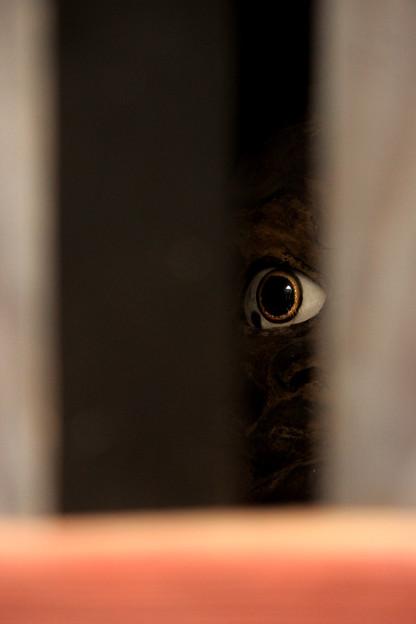 @ ギョッ!~Peeping~