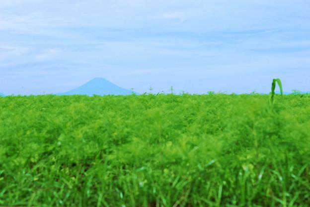 秋の黒富士