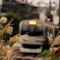 晩秋の鎌倉路