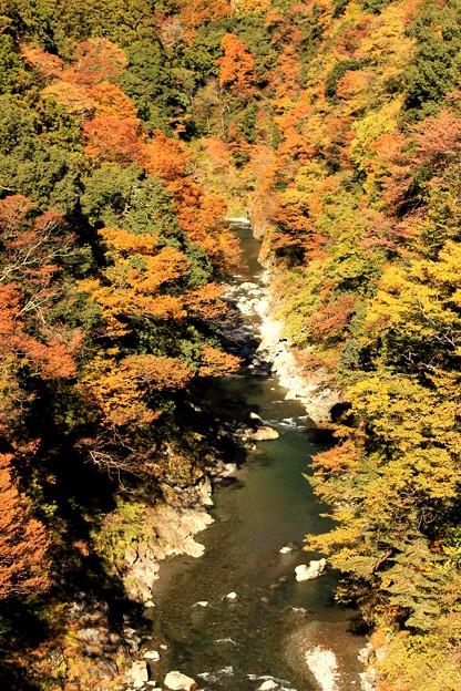 Photos: 色づく渓谷~鳩の巣バージョン~