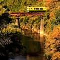 秋の鉄橋列車
