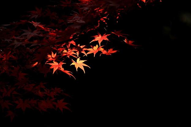 照もみぢ~Sunray In The Dark