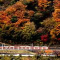 写真: 紅葉電車~箱根登山鉄道バージョン~