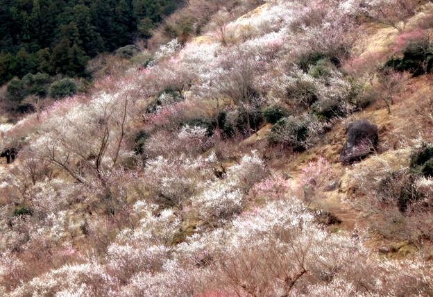 Photos: 梅源郷