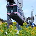 Photos: 菜の花電車~SMRバージョン~