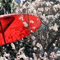 写真: 春の音色