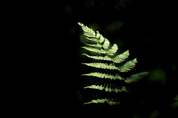 写真: 森の中