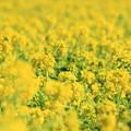 写真: ハマの春