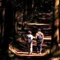 写真: 光と陰の小径~Natural Love~
