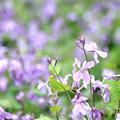 Photos: Pop Spring~Purple Side~
