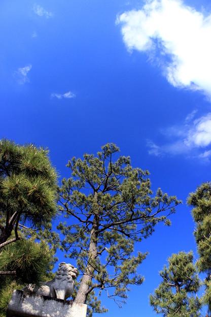 豪徳寺ブルー