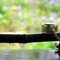 春の手水舎