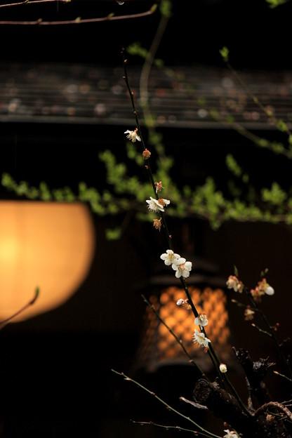 Photos: 古都の名残り梅