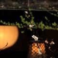 写真: 古都の名残り梅