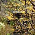 写真: 春の参道