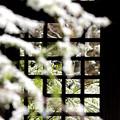 Photos: 雪の木戸