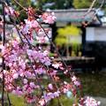 江戸城の華