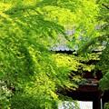 写真: 緑の山門