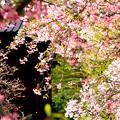 写真: 春のひかり