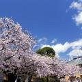 写真: Hotel Cherry Blossom