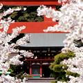Photos: 華の八幡宮