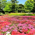 写真: 江戸城の華