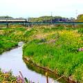 Photos: 春の小川