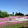 写真: ピンクカーペット